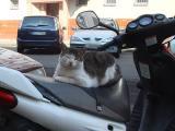 bikercat.jpg